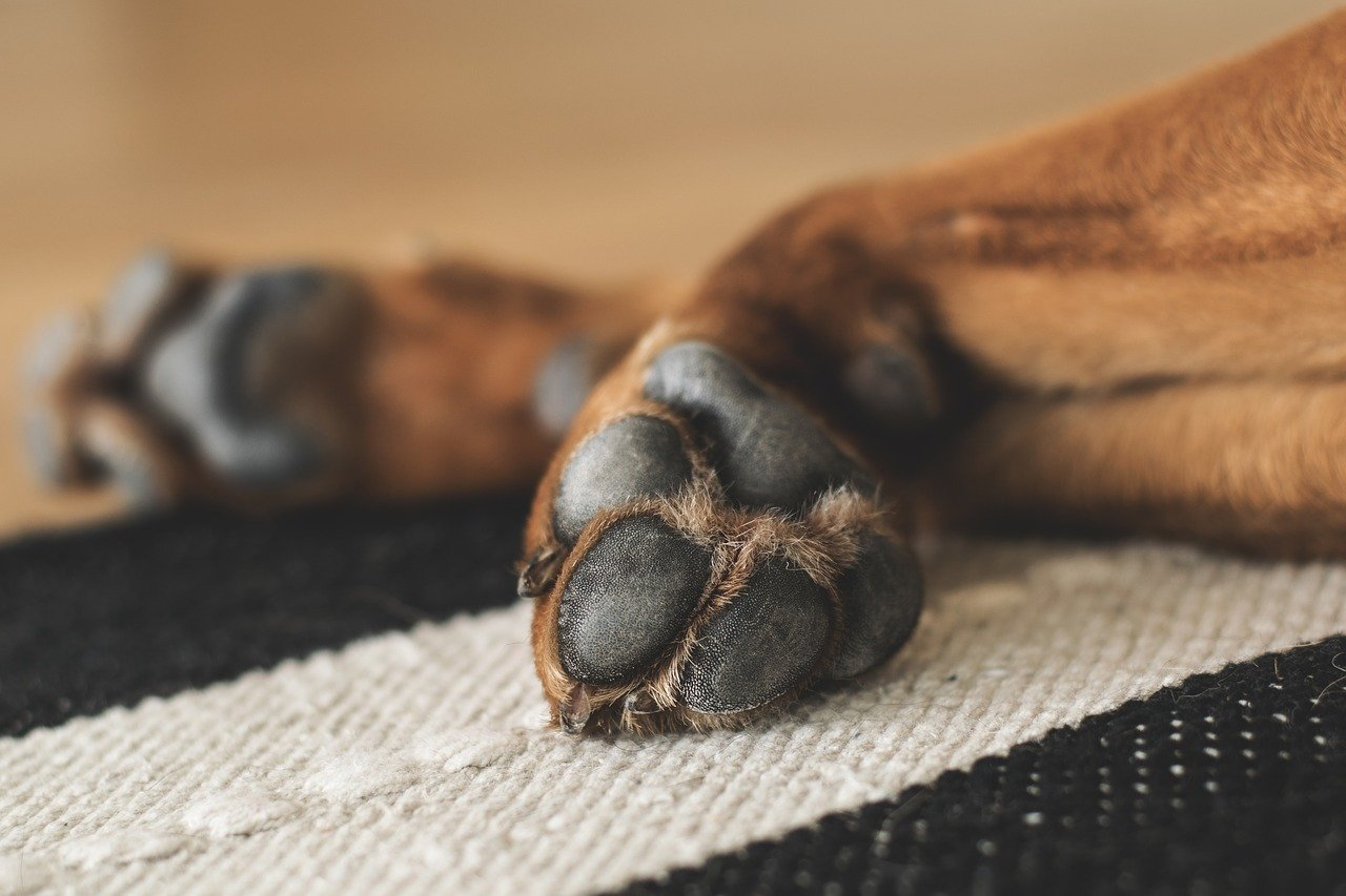 paws, dog, pet