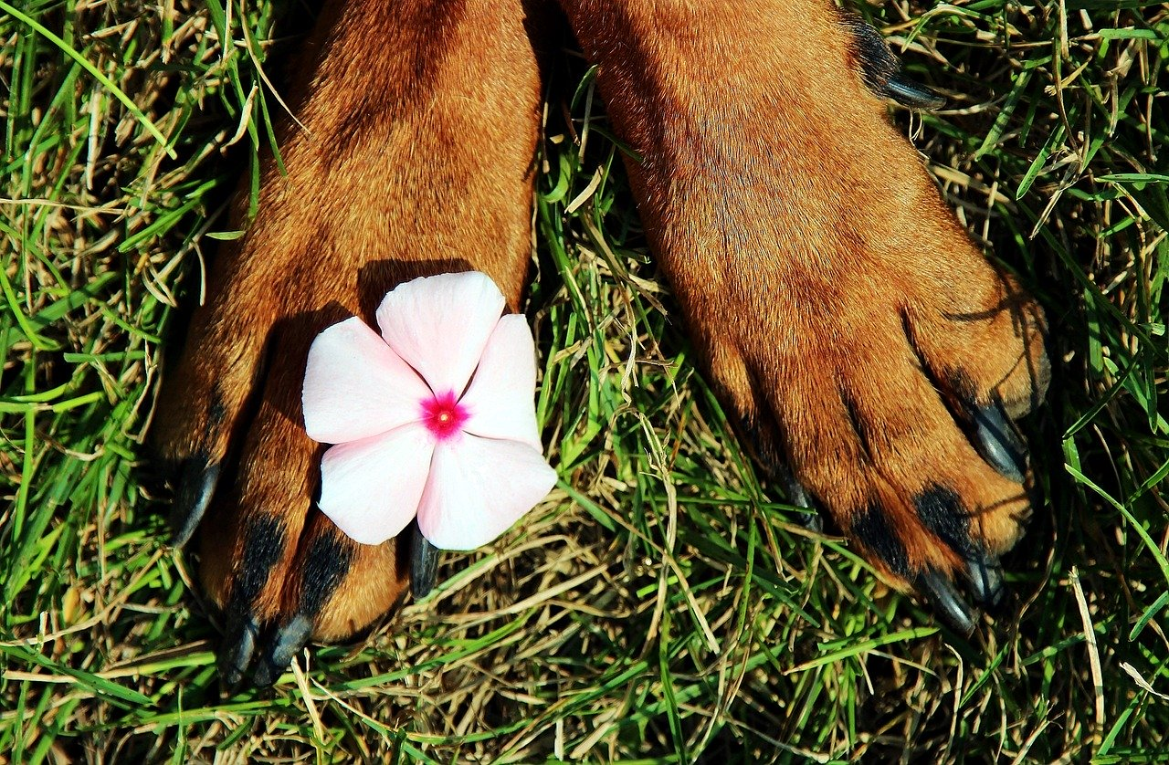 paws, pads, flower